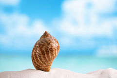 Nice sea  shell on white Florida beach sand under the sun light Royalty Free Stock Image