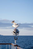 Nice seagull Stock Photography