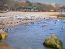 Nice seagulls, ducks, pigeons on the Black sea Royalty Free Stock Photo