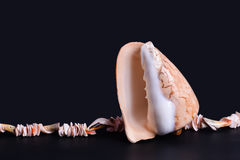 Nice seashell and string of small shells Royalty Free Stock Photography