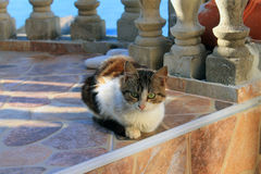 Nice serbian cat at the Adriatic sea shore (Montenegro, Ulcinj, winter). Nice and calm serbian cat having rest  at the Adriatic sea shore (Montenegro, Ulcinj Royalty Free Stock Images