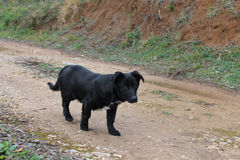 Nice serbian dog walking along the road (Montenegro, Ulcinj, winter). Little nice serbian dog walking along the road and happy to meet someone(Montenegro, Ulcinj Stock Photos