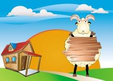 Nice sheep. How is sheep nice animal and related to many events like Islamic feast Stock Image