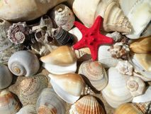 Beautiful different shells on sand Royalty Free Stock Photography