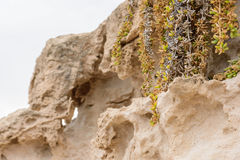 Side view of the natural background of yellow limestone with the bumpy surface with dark hollows that are smoothed by the sea wave Stock Photos