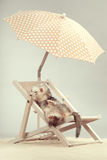 Nice silver ferret portrait on beach chair in studio. Ferret portrait on beach chair in studio Stock Photos