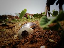 A nice sirangy Bottle in mud with full of small plants royalty free stock images
