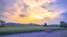 Nice sky on corn fields Stock Photo