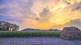 Nice sky on corn fields Stock Photos