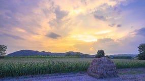 Nice sky on corn fields Stock Image