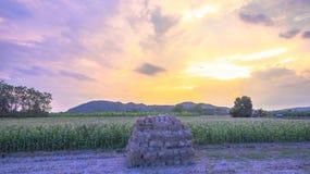 Nice sky on corn fields Royalty Free Stock Photography