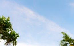 Nice Sky with palm tree Royalty Free Stock Photos