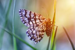 Nice small butterfly sitting on stem of grass, colored photograph stock images
