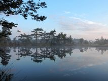 Little lake, plants and beautiful cloudy sky in swamp, Lithuania Royalty Free Stock Photos