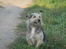 Nice smiling dog. Is sitting near the road Stock Photos