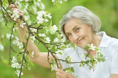 Nice smiling old woman Stock Images