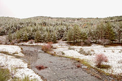 Nice snowy pine forest Stock Photography