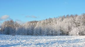 Beautiful snowy winter trees, Lithuania Royalty Free Stock Photos