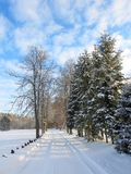 Road and beautiful snowy trees in winter, Lithuania Royalty Free Stock Photo