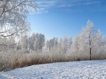 Beautiful white snowy trees, Lithuania stock photography