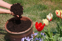 Nice potting  soil Stock Photo
