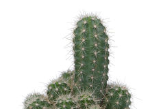 A nice specimen of cactus Royalty Free Stock Photography