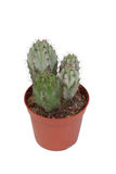 A nice specimen of cactus Royalty Free Stock Photos