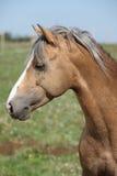 Nice sport pony standing on pasturage Stock Image