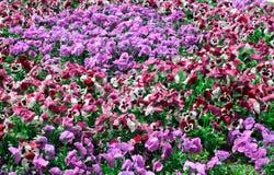 Nice spring garden Stock Image