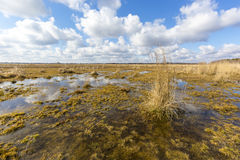 Nice spring scene on swamp Royalty Free Stock Photography