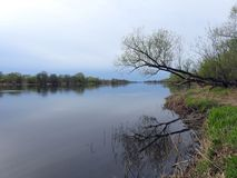 River Nemunas and beautiful trees in spring, Lithuania Stock Photo