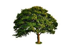 Nice strong tree Stock Photos