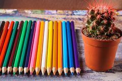 Nice succulent in a pot with color pencils. Stock Photography