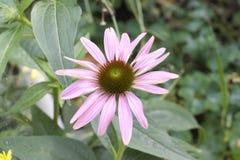 Nice summer flower in the sunshine Stock Images