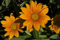 Nice summer flowers. Close up in my garden Stock Images