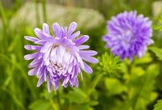 Nice summer flowers. In garden Stock Photos