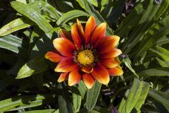 Nice summer flowers. Close up in my garden Stock Photography
