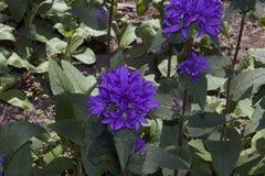Nice summer flowers. In the sunshine in my garden Stock Photos