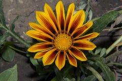 Nice summer flowers. In the sunshine in my garden Stock Photo