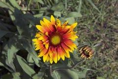 Nice summer flowers. In the sunshine in my garden Stock Image