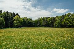 Nice summer meadow with yellow flower and trees, Czech landcape stock photos