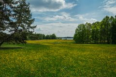 Nice summer meadow with yellow flower, trees and pond, Czech landcape stock photography