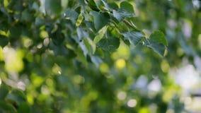 Nice sun light trhoug the leaves stock video
