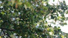 Nice sun light trhoug the leaves stock video footage