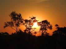 Beautiful sunrise in Aukstumalos swamp, Lithuania royalty free stock photo
