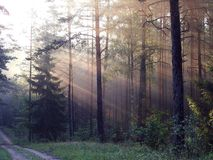 Beautiful sunrise in forest, Lithuania Stock Photo