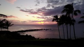 Nice sunset on tropical island near magic ocean on the background of cloudy sky on maui,hawaii. Beautiful palm trees on the ocean shore and fascinating sky with stock video