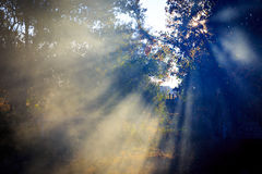 Nice sunshine an rays Royalty Free Stock Images