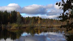 Nice swamp in autumn stock footage