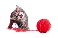 Nice Tabby Kitten Playing Red Clew Or Ball Stock Photography
